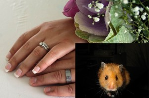 Wedding Rings w Hamster